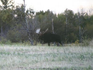 MooseHunting-AlbertaRiverValleyLodge10